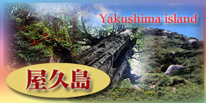 Yakushima